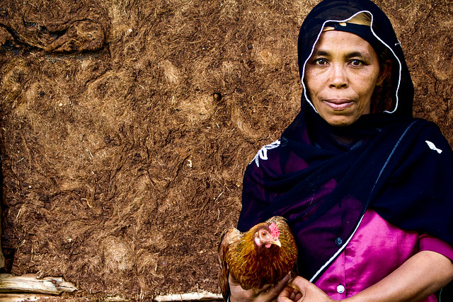 Empowering women through poultry