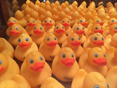 Some rubber ducks at the Peabody Hotel in Memphis