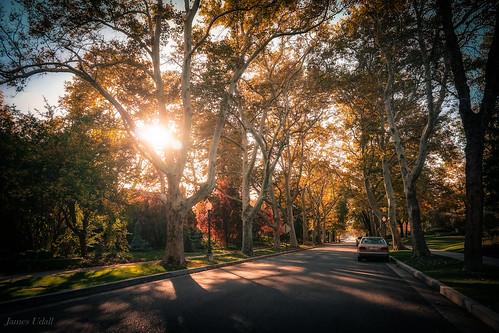 street autumn trees homes usa utah suburban united neighborhood saltlakecity states