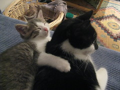 Jingle (mother cat) and Jingle Belle (kitten) relaxing together on the couch