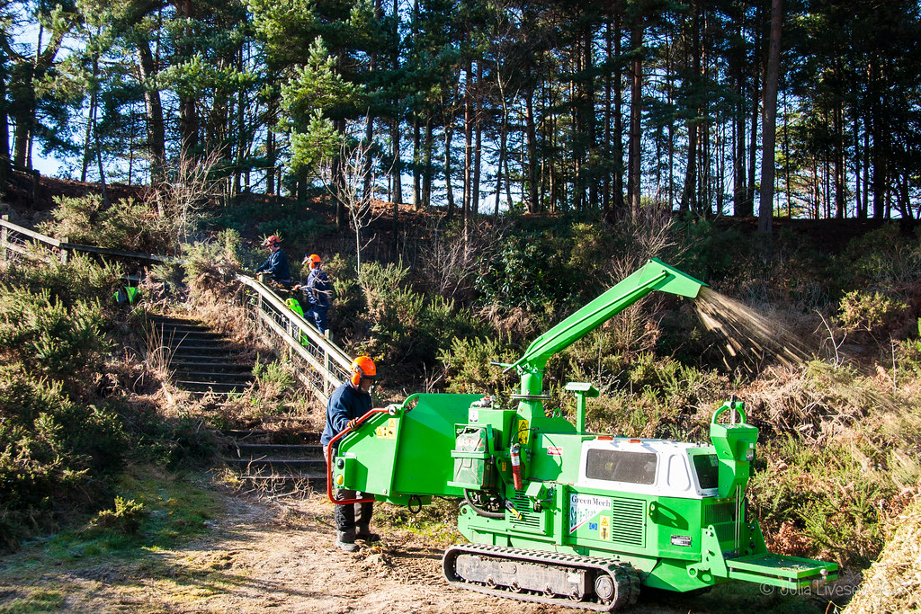 More cutting back on Canford Heath