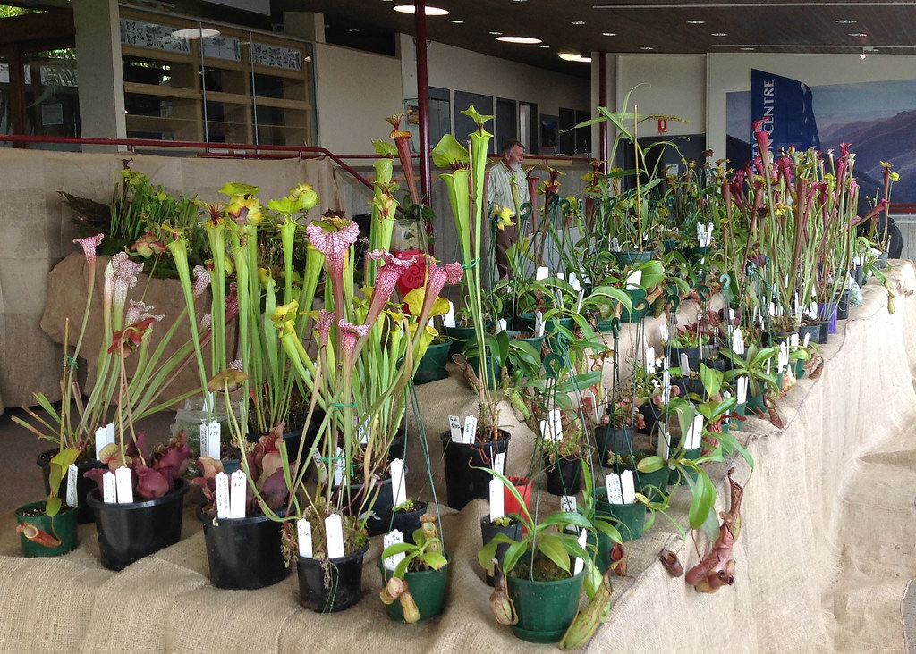 Sarracenia on sale at the Australasian CP Society Sale Day