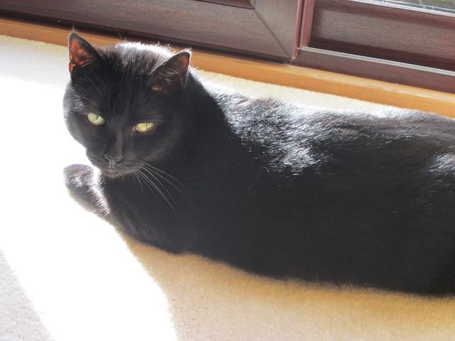 sunny Flo (1)