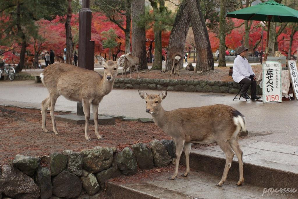 Nara_0034
