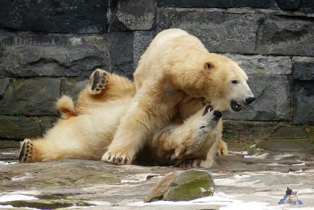 Tierpark Berlin 07.02.2015   75