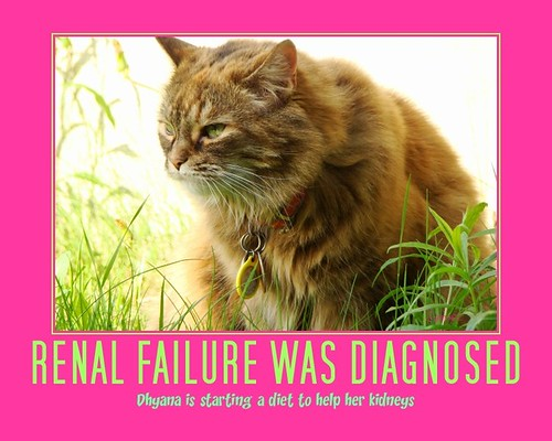 Renal failure was diagnosed on my baby girl Dhyana.
