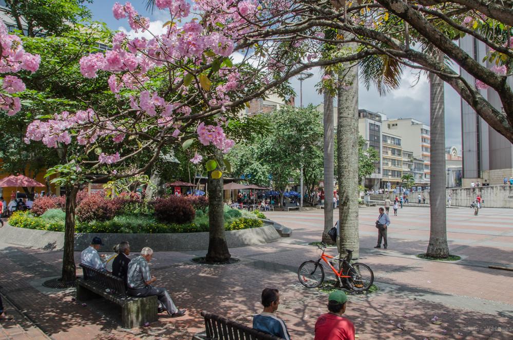 Plaza de Bolivar, Armenia, Quíndio - Imágenes fotográficas de Armenia