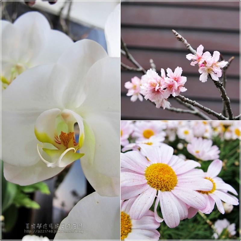 23夢工廠的花