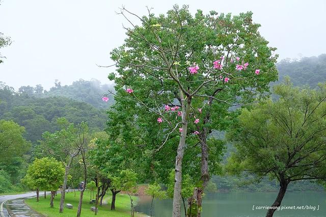 梅花湖 (32)