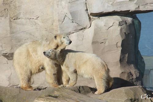 Zoo am Meer Bremerhaven 08.03.20156