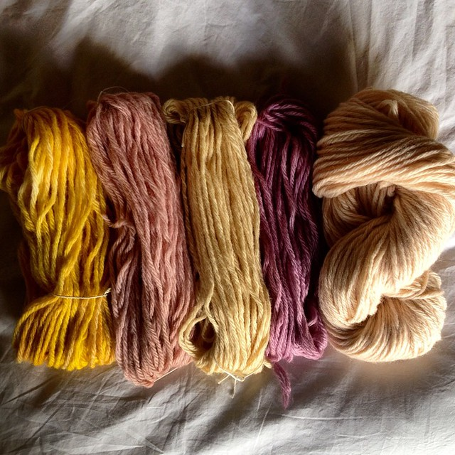 Solar dyeing results: tumeric, raspberry, ivy, red cabbage, strawberry.