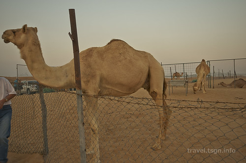 【写真】2014 世界一周 : ドバイ・砂漠(1日目)/2014-12-17/PICT6696