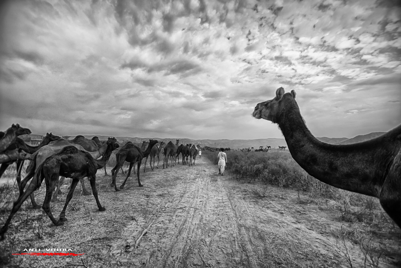 Camel's eye view