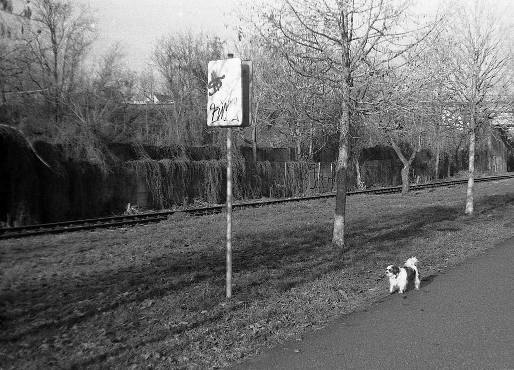 Orion EE - Landscape with a Doggie 02