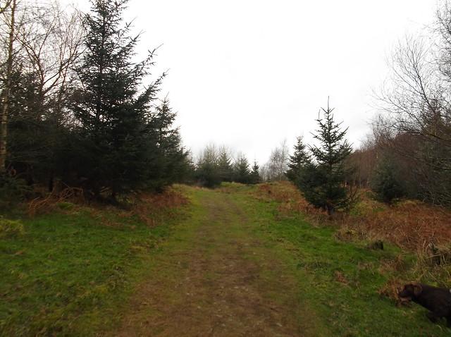 breidden hill 018