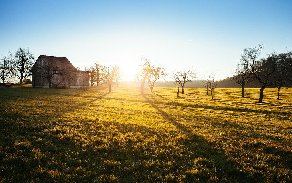 Marianna-Digioia-cabin-grass
