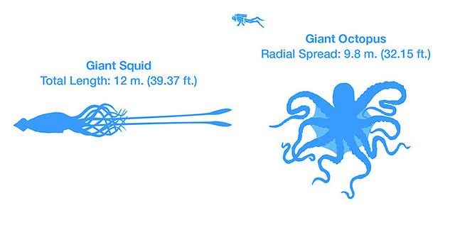 Marine_megafauna_Infographic