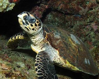 """<img src=""""padi-diving-salang-bay-north-tioman-island-malaysia.jpg"""" alt=""""PADI diving, Salang Bay North, Tioman Island, Malaysia"""" />"""