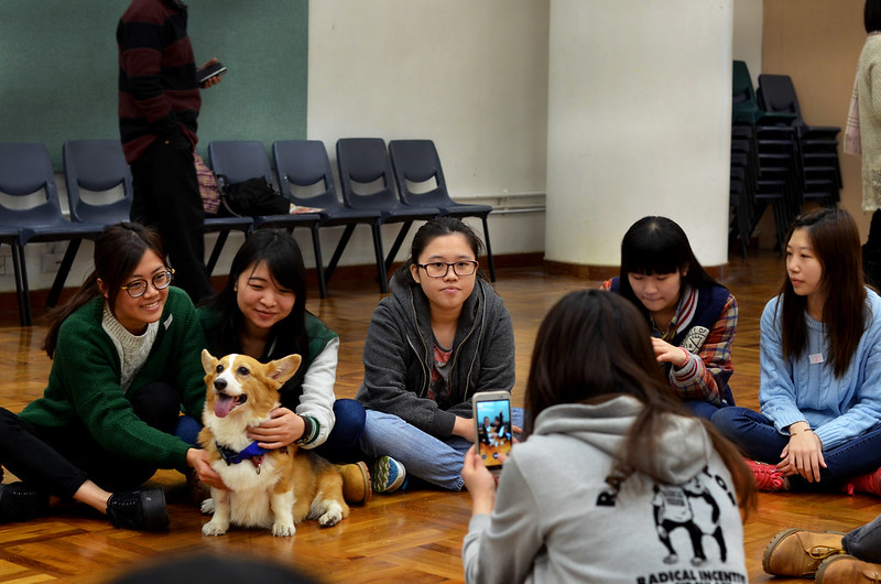students and dogs interacting