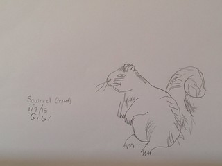 Squirrel traced