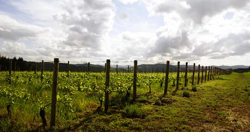 sky clouds oregon landscape vineyard vines grapes 500views gaston 2014 oregonwinecountry silversunset pattonvalleyvineyards