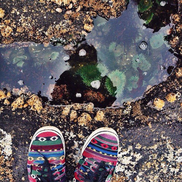 well hello there tide pool 🐚