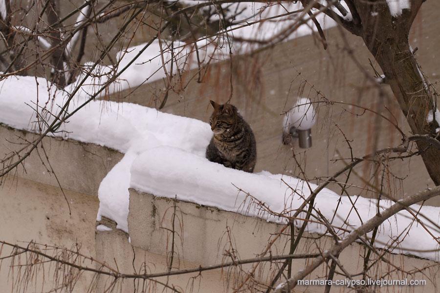 Snow-2012-1