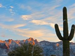 Tucson Arizona 2015