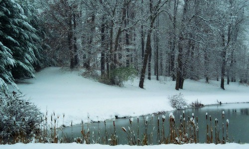 winter ohio snow nature beauty pond pinetrees snowcovered portagecountyohio suffieldohio treemendoustuesday