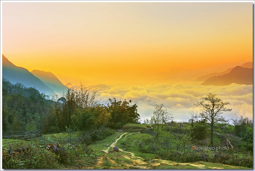 sunset mountain tree green clouds sunrise landscape sapa yallow hightland làocai sigma50f14 canon5dmark3 hầuthào