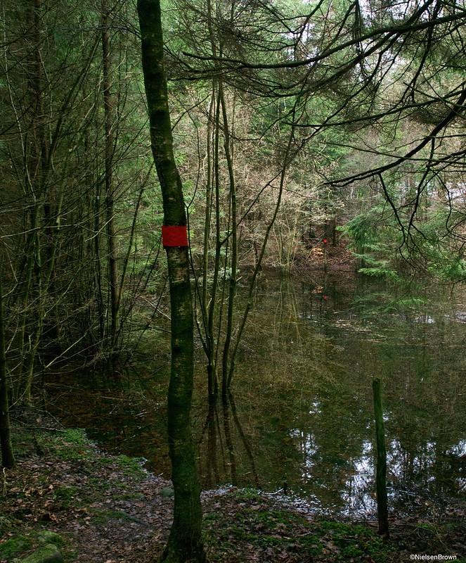 Trail and water Gällarpesjön-imp