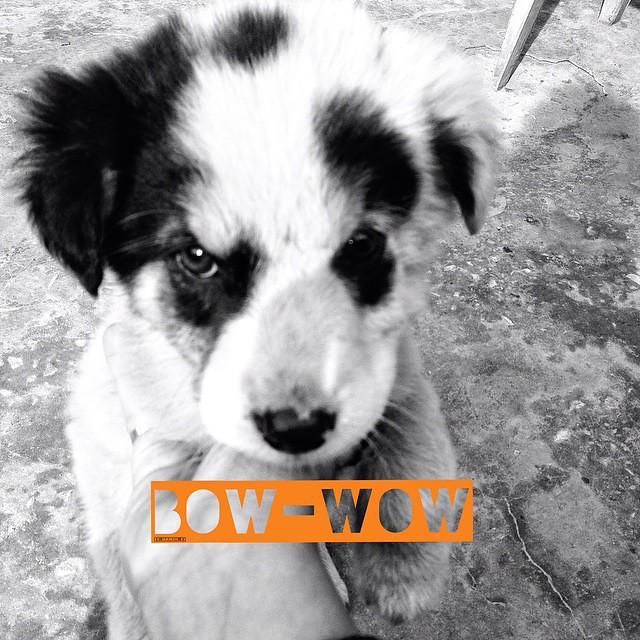 Scotty 😍 #puppy #panda #looks #love #stray #dogs #baggu