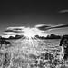 Sunny happy dogs by jayneboo - I'll be back soon