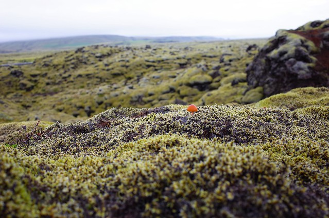 Iceland Day4 - volcano moss
