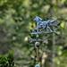 weathervane-5748_3 by BillRhodesPhoto