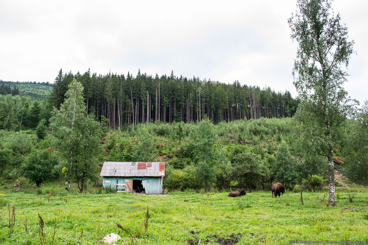 Ферма Зубров в Ивано-Франковской области