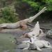 Dinosaurs for Repair by socarra
