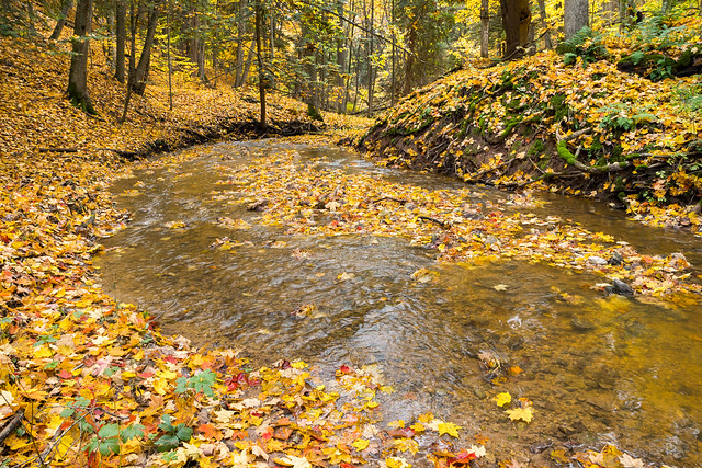 Creek, Stream, Autumn, Fall, Leaves, Woodland, Woods