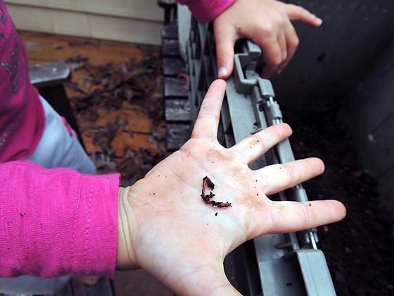 worm-composting-14