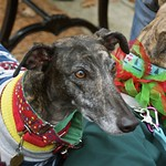 Greyhound Adventures at Horn Pond, Woburn MA, Dec 21st 2014