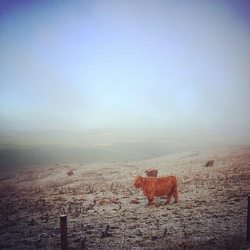 Predominant view on the Ridgeway this morning....
