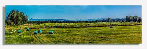 panorama pano hayfield silage fraserriver lightroom photoshopelements martinsmith goldenearsbridge canonpowershots120 silagebags 5shotpano topazclarity barstonisland ©martinsmith barnstonislandpano