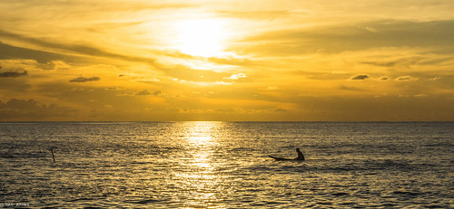 ocean sunset sea sun reflection silhouette dusk surfer wave nauru