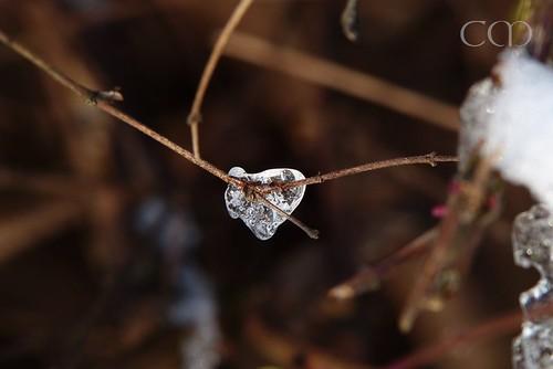 Ice heart...:)