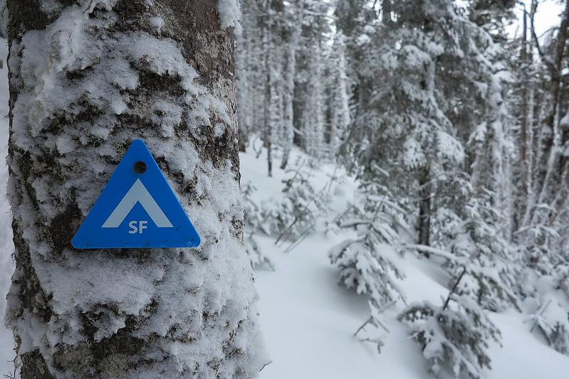 Arbres glacées - White Mountains