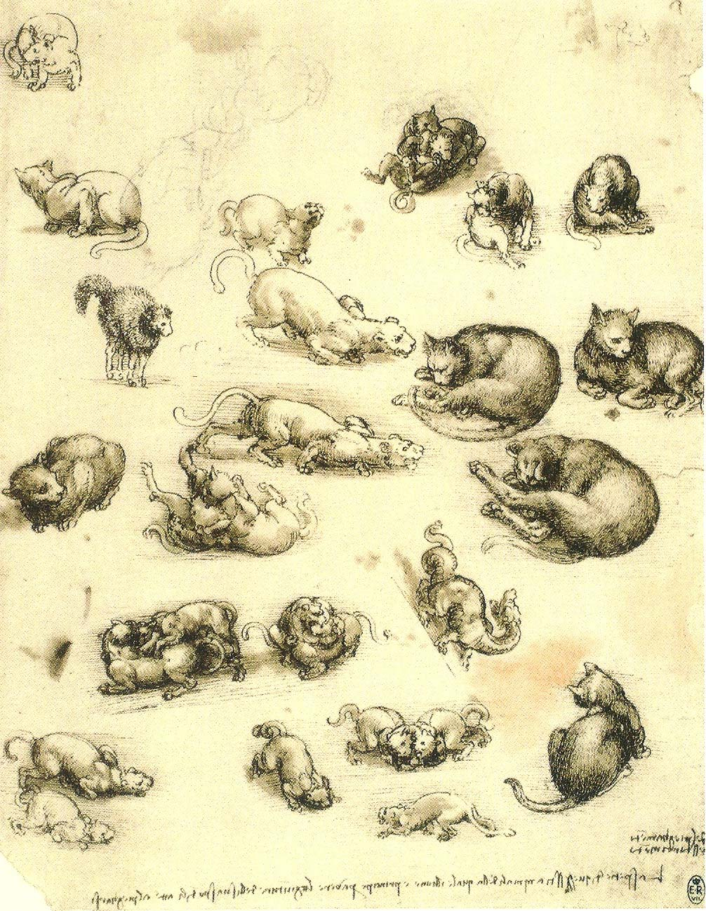 Leonardo da Vinci, Studienblatt mit Katzen und Drachen, 1513--1515