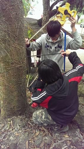嘉義大學森林暨自然資源系研究團隊取樣3棵芒果樹,估算樹齡約在142~178歲之間;圖片提供:美濃愛鄉協進會。