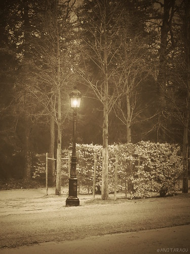 Lamp Post, foggy day