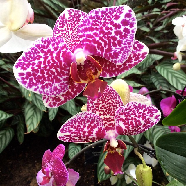 Kew Gardens February 2015