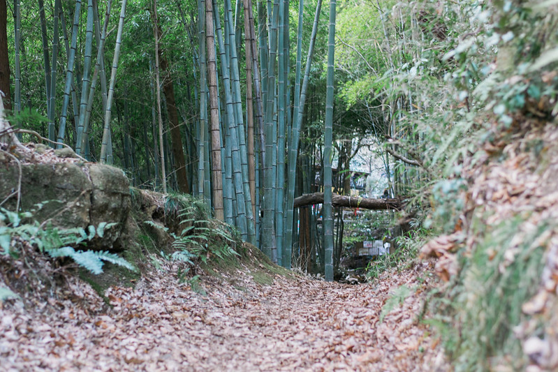 Bamboo Place in Tenen Hiking Trail